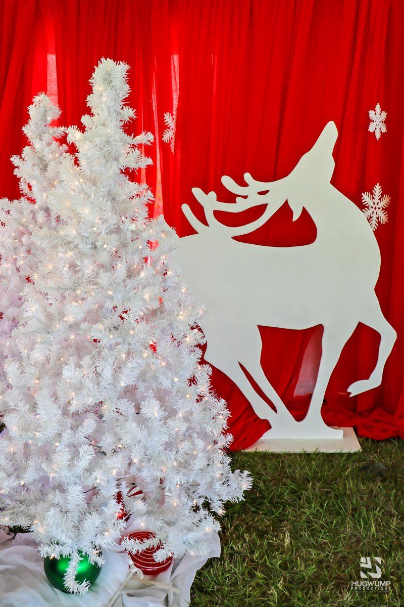 Christmas-Tree-Rentals-6